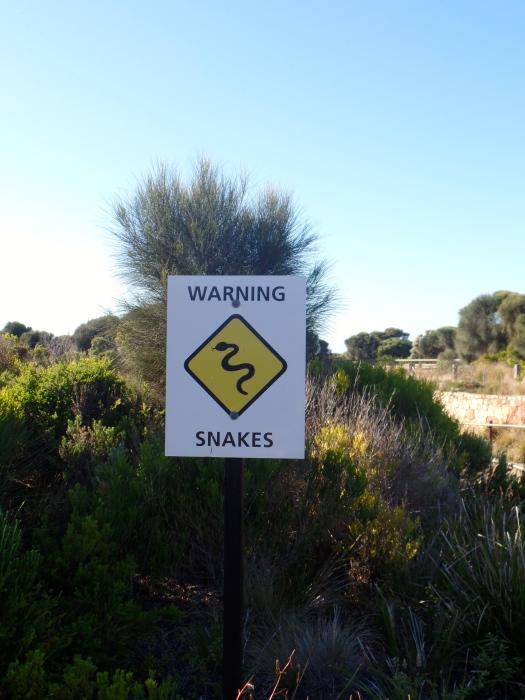 Snake season!
