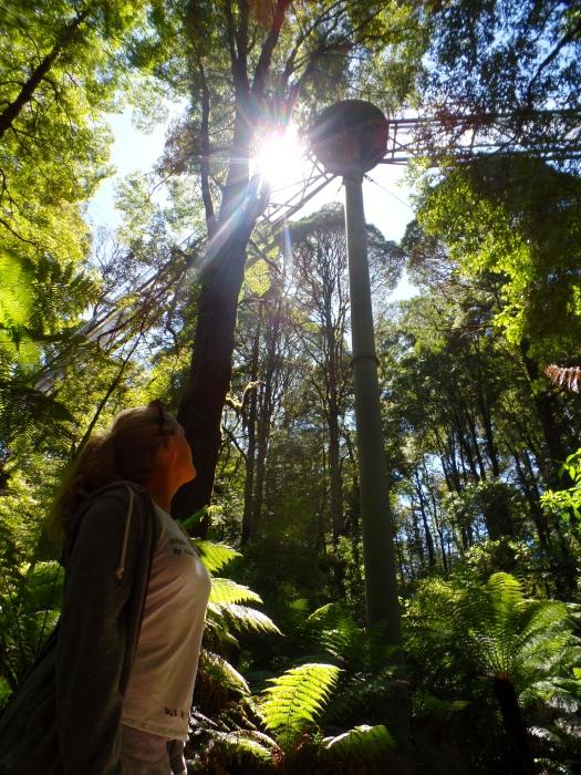 Rainforest walkways